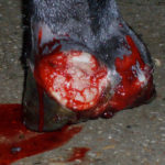cursussen woundmanagement bij paarden